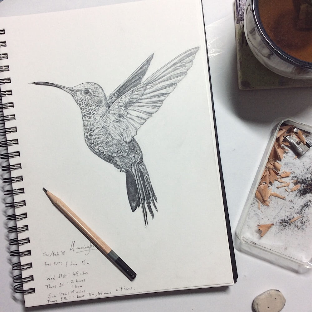 Sky Siouki Hummingbird Illustration