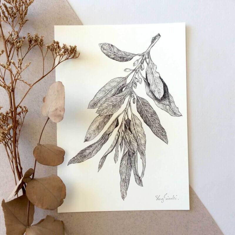 Wild-Olive-Art-Print-Sky-Siouki